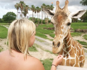 Submitted by Troy Rogers Jazmyn Jane feeds a giraffe during a visit to Busch Gardens in Tampa, Fla., which was just one of several science related experiences Sullivan students encountered on their trip this past June.